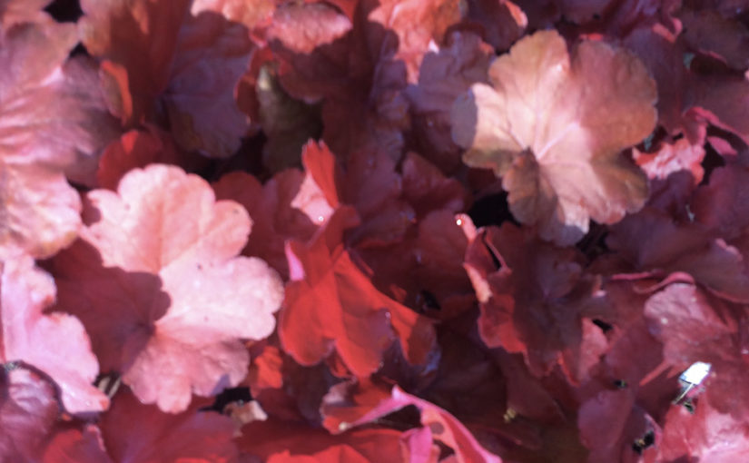 Image feuilles rouges