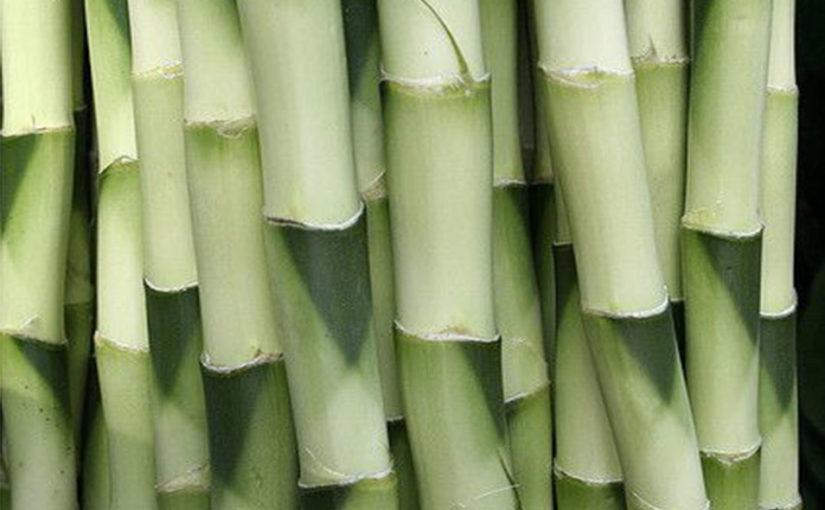 Image Bambou